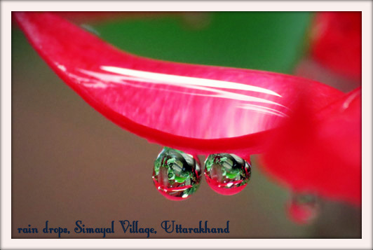 Macro shot of rain drops at Simayal Village, Uttarakhand